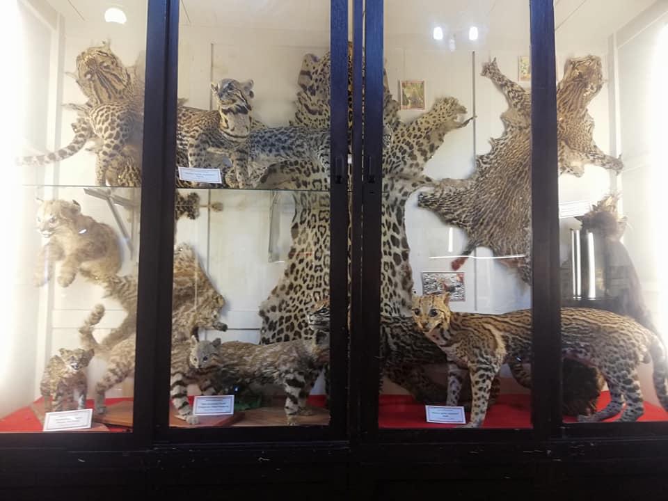 Sala principal fauna
