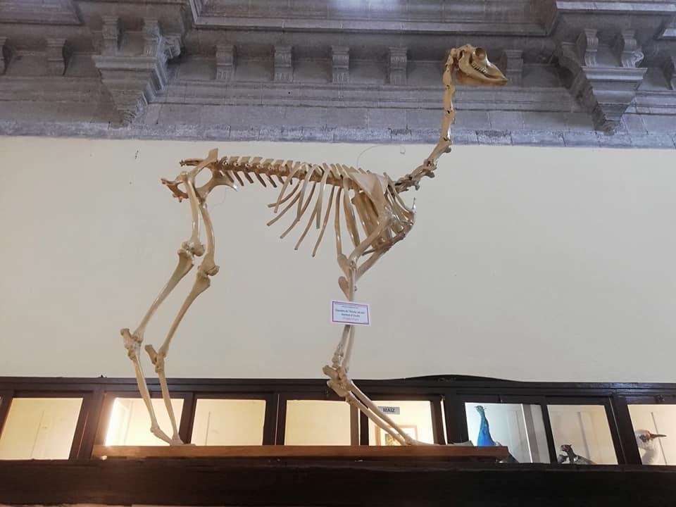 Sección paleontológica