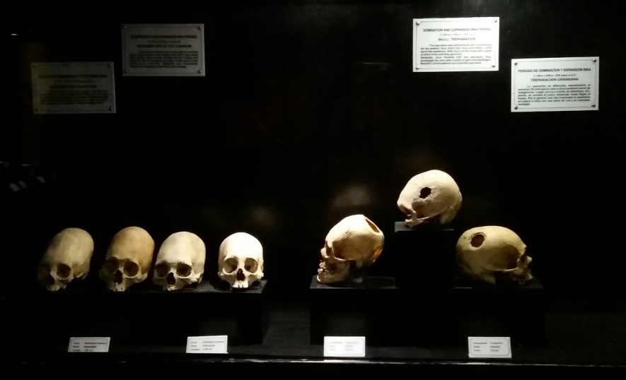 cráneos museo del sitio Qorikancha
